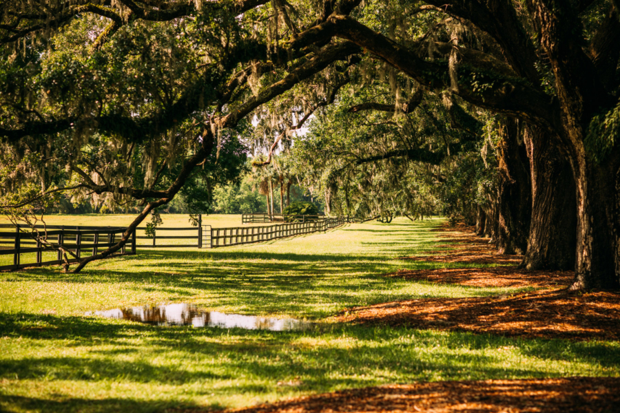Southern Greenery - Travel Guide: 36 hours in Charleston, SC // NotJessFashion.com