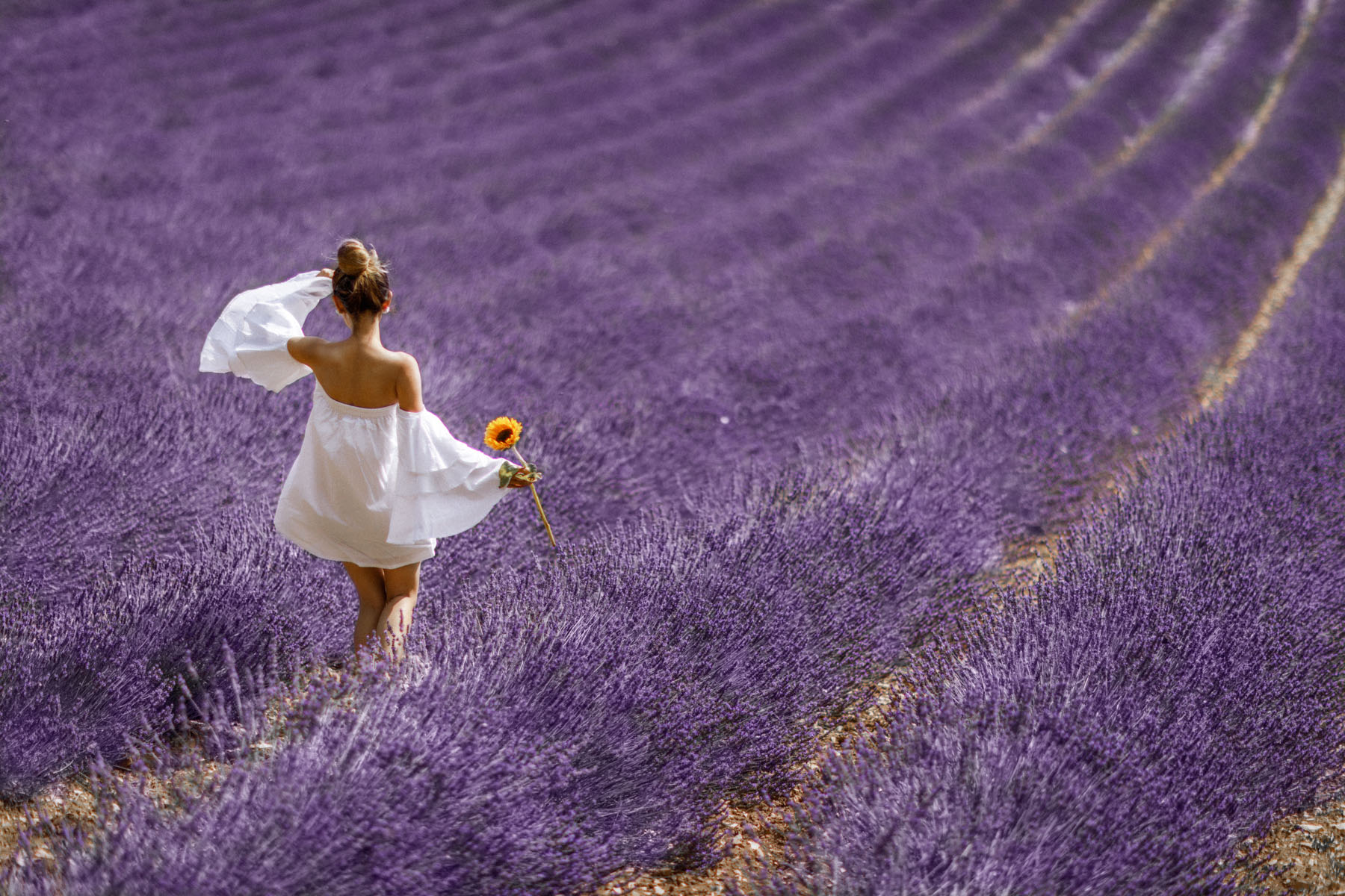 Lavender Field - A Souvenir from Provence // NotJessFashion.com