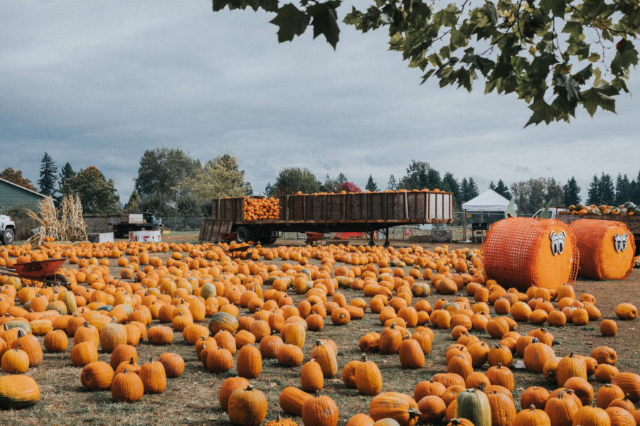 fun fall activities at the pumpkin patch // Jessica Wang - Notjessfashion.com